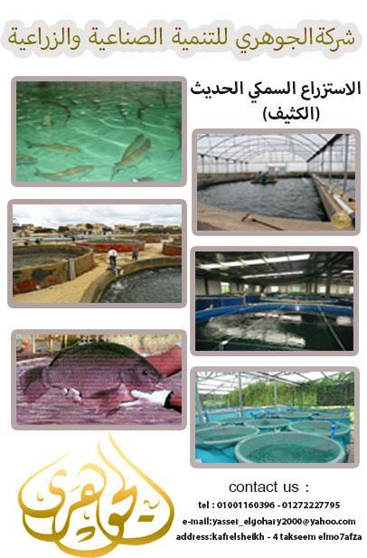 الاستزراع السمكى شركة الجوهرى 927251778.jpg