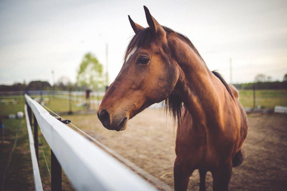 غاية الجمال والابداع لعشاق الخيول 218659411.jpg