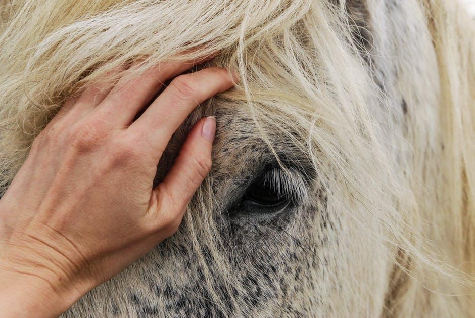 غاية الجمال والابداع لعشاق الخيول 431236111.jpeg